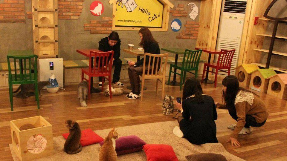 catcafe07 Самые необычные «кошачьи» кафе из разных стран мира