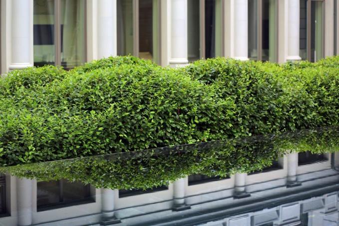 Растения для ландшафтного дизайна. Кизильник