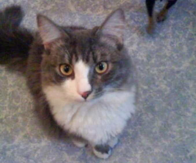 """""""Гоните догов! От них одни неприятности…"""" Рассказ кота Адольфа, который случайно потерял 6 лет своей жизни"""