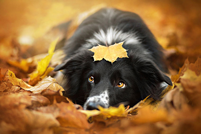 Потрясающие фото животных в волшебстве осени