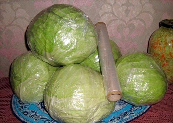 Как сохранить капусту свежей до лета