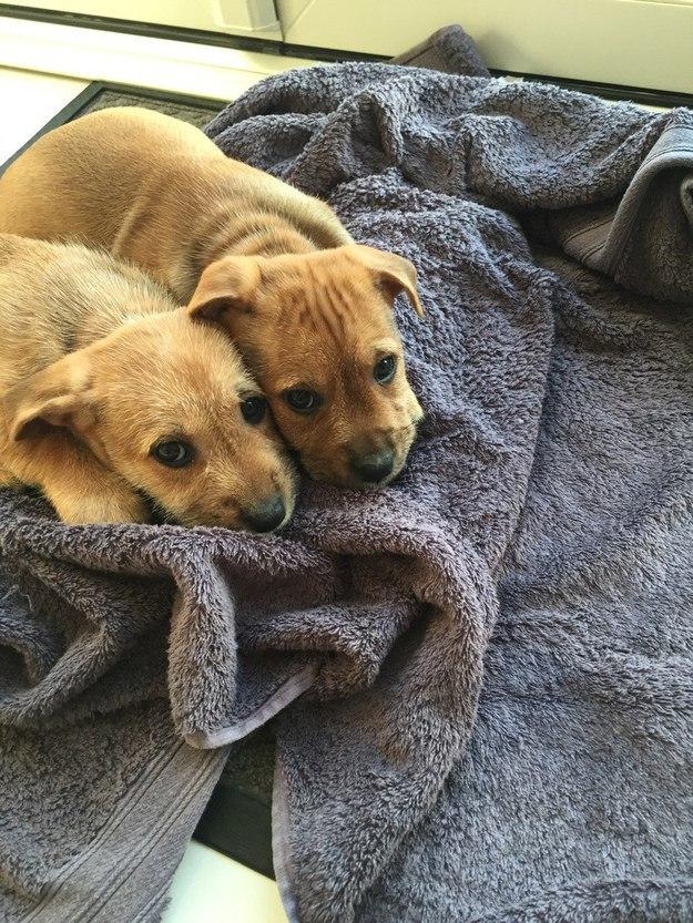 9. Два щенка, к щеке щека животные, позитив