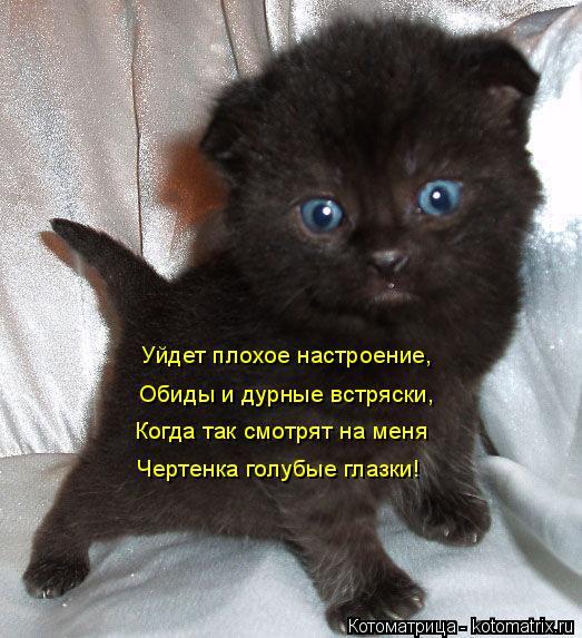 Котоматрица: Уйдет плохое настроение, Обиды и дурные встряски, Когда так смотрят на меня Чертенка голубые глазки!