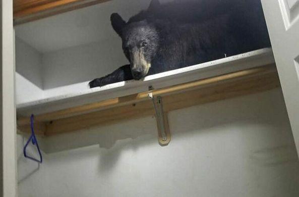 В США медведь проник в дом и уснул в шкафу