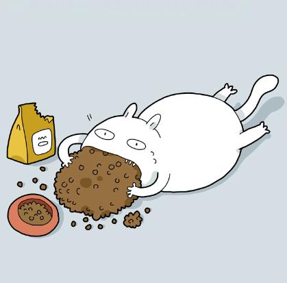 Типы котов в картинках. А у тебя какой?