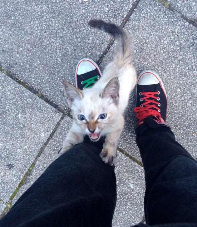 Крошечный бродячий котенок выбрал себе в парке нового хозяина