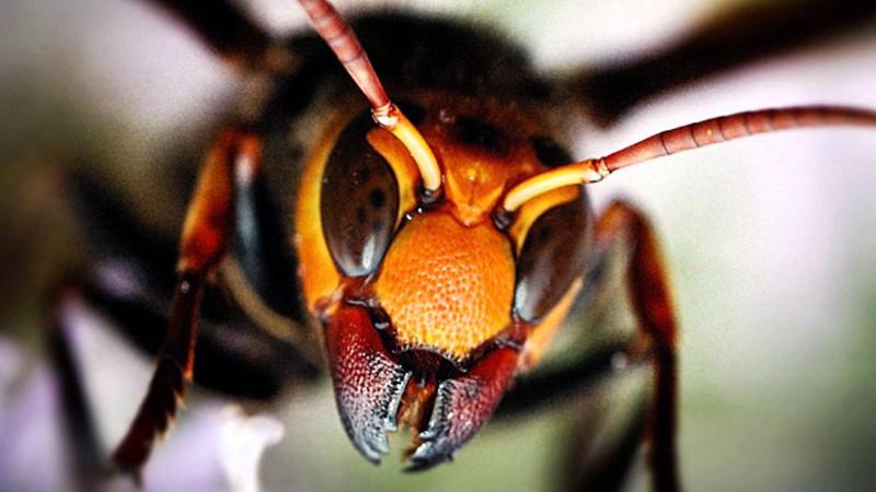 10 самых опасных насекомых планеты
