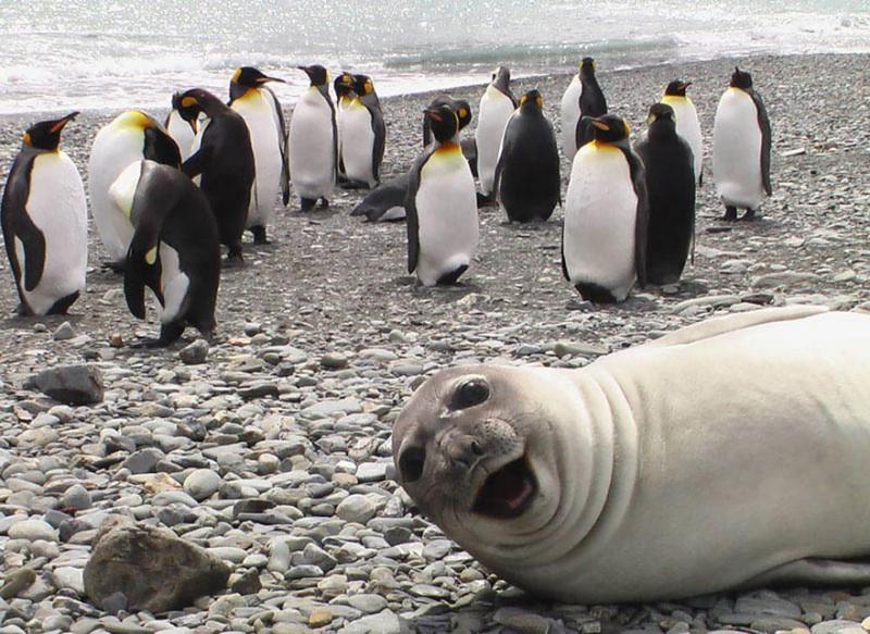 Учись у лучших: 20 смешных животных, способных мастерски испортить любую фотографию