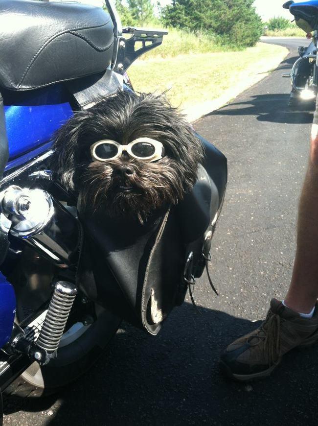 14. Этот мотоциклист готов к поездке весна, животные
