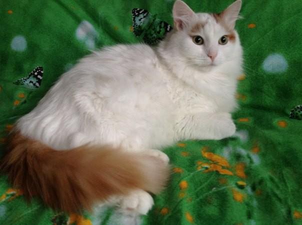 Добрая история дачного кота Паши: http://ushilapychvost.ru/blog/43227484218/next