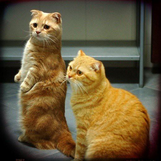 Рыжая кошка в доме — это кусочек солнышка!