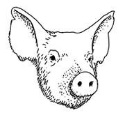 Задать жару: Основы приготовления мяса на открытом огне. Изображение №63.