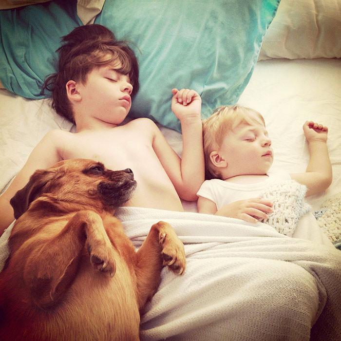 Спящее трио  дружба, ребенок, собака