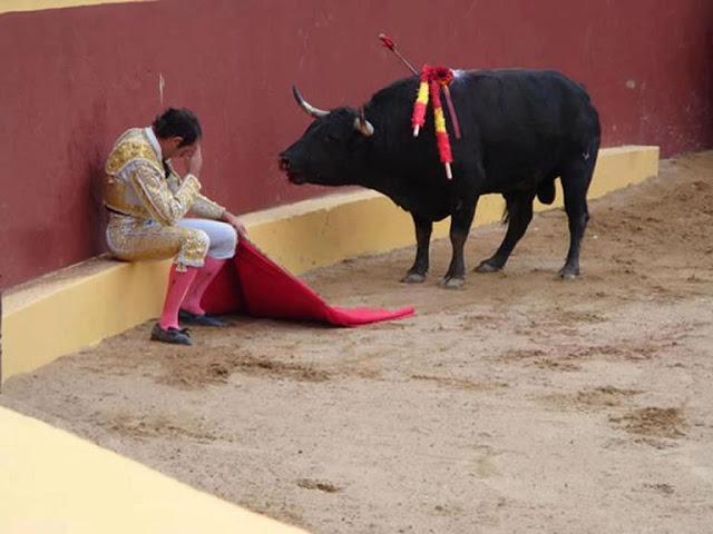 Он посмотрел в глаза быку, и всё в нем перевернулось...