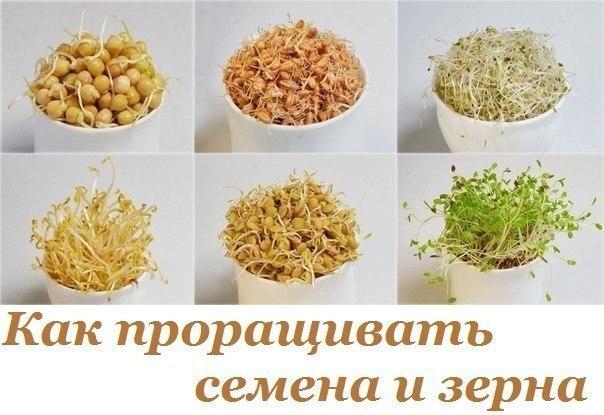 Как проращивать семена и зерна: сохрани их энергетический потенциал для своего здоровья
