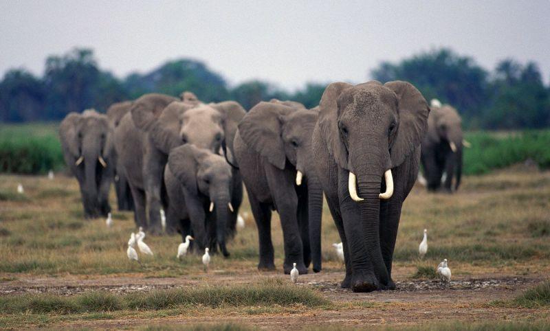 Существуют ли слоновьи кладбища?