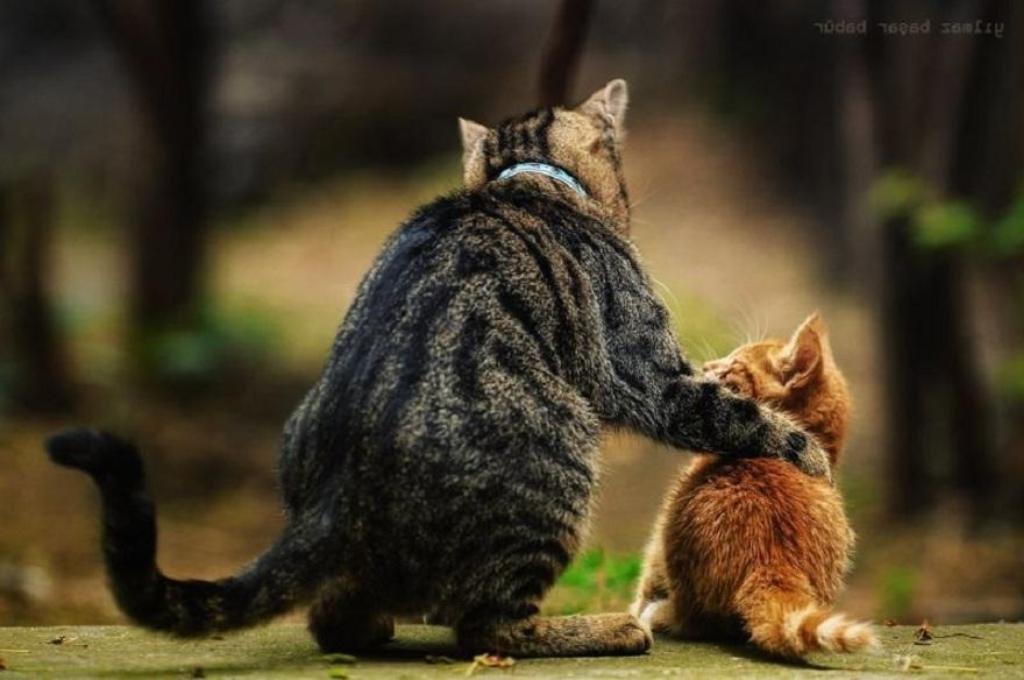 Все, что вы хотели узнать о кошках…
