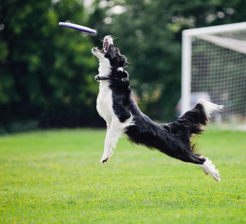 почему собака лает без причины