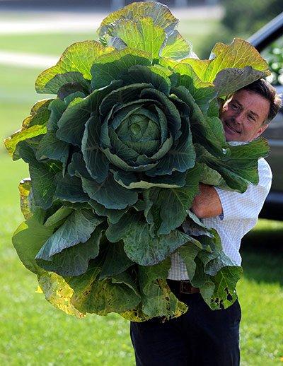 МИР РАСТЕНИЙ. Овощи-гиганты