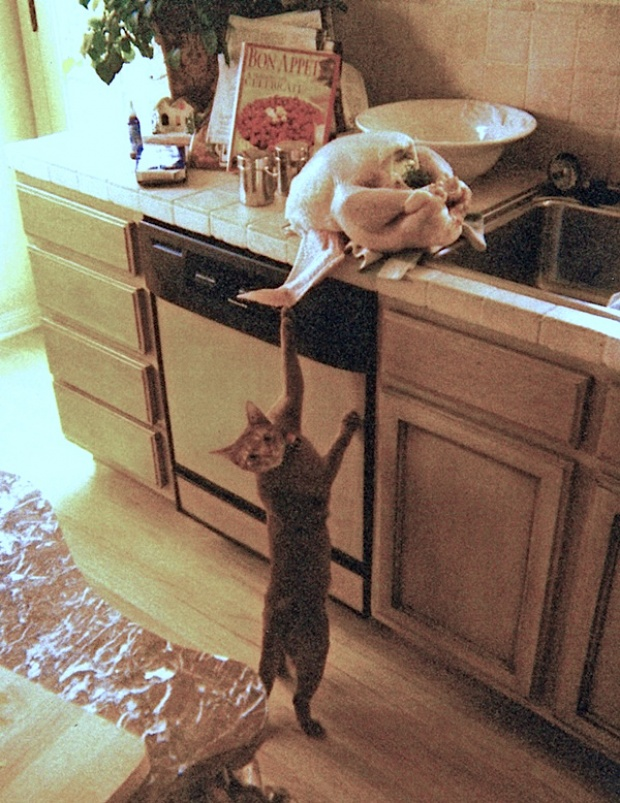 Понять и простить... Кошки и компания
