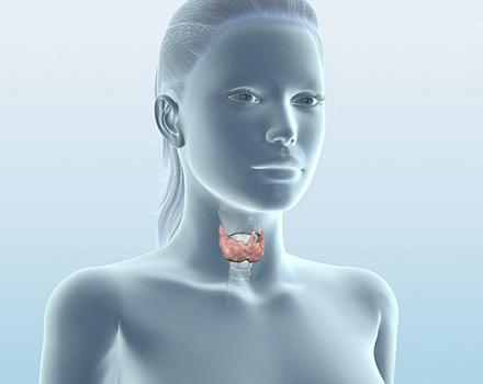 О результатах применения фитоприпаратов компании NSP в практической эндокринологии