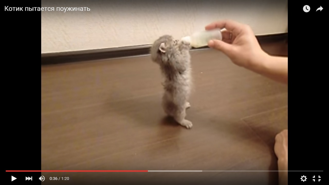 """Сцуки,отдайте зверю бутылку!"""