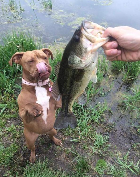 рыбалка сука видео