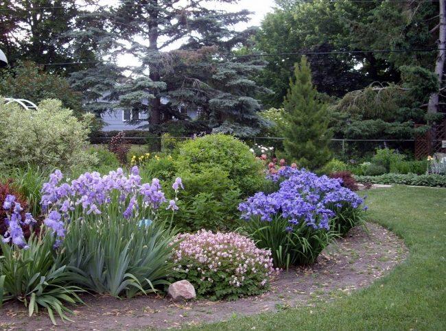 Как красиво посадить ирисы на даче