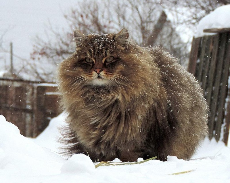 1.  кошка, пушистость, шерсть