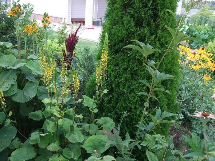 Как правильно посадить хвойные (сосну, ель) - Ландшафтный дизайн