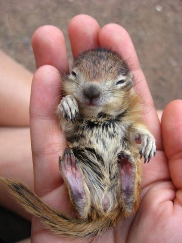 16. Маленький бурундук детеныши, животные, милота