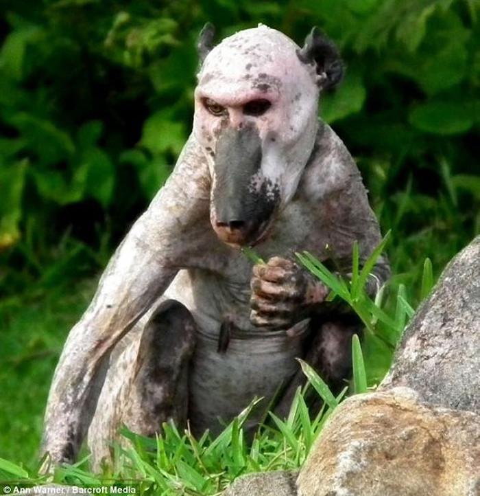 10. Бабуин. Животные без шерсти, Этот удивительный мир, животные