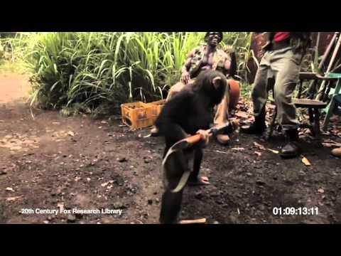 Ape With AK 47