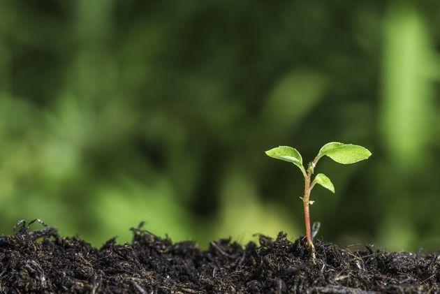 Как преодолеть вынужденный покой семян