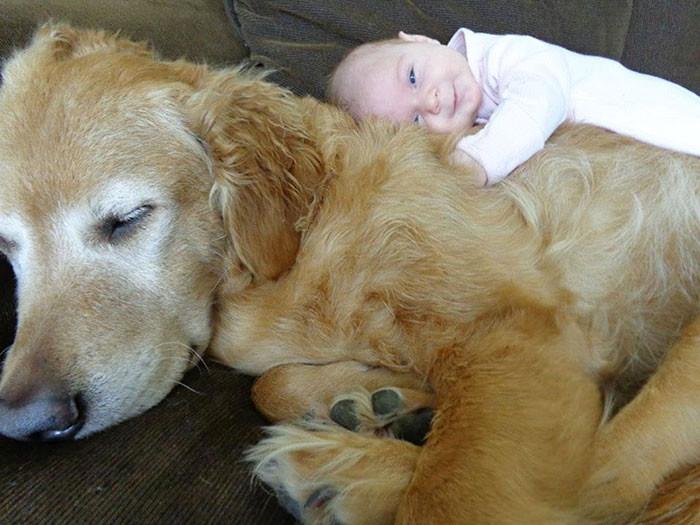 Самый любимый друг дружба, ребенок, собака