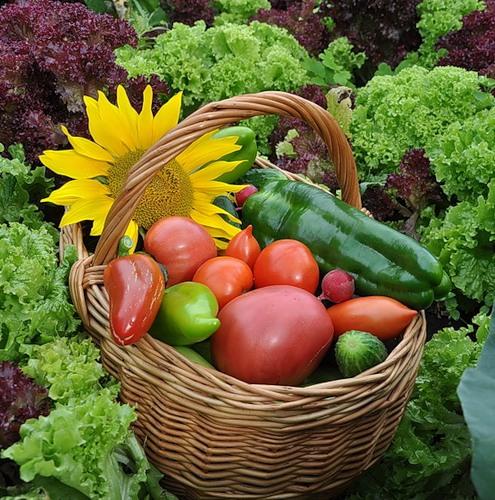 Сельское хозяйство будущего: как выращивать овощи без Солнца ПродМаg