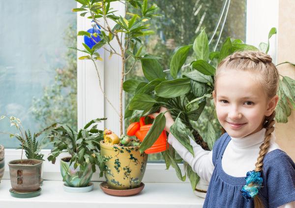Растения для детской комнаты