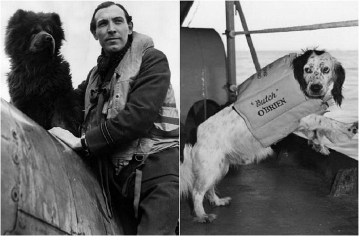 20 животных, принимавших активное участие во Второй мировой войне