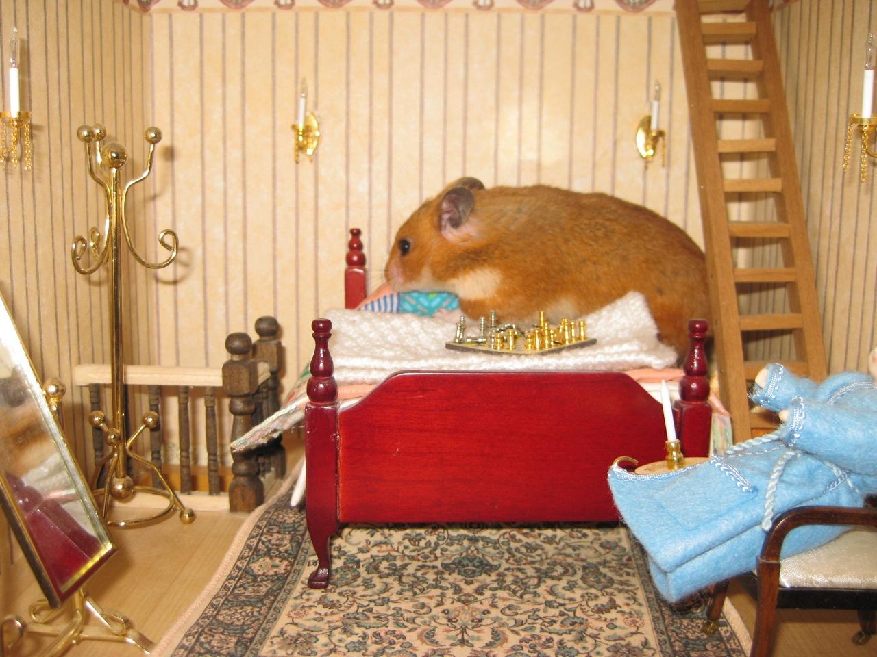 Сделать в домашних условиях домика для хомяка