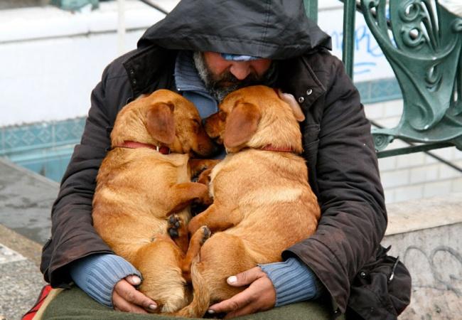 Собаки, которые не оставили своих хозяев в трудную минуту