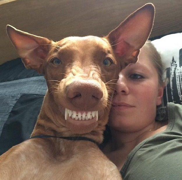 Почему собаки едят какашки. Копрофагия.