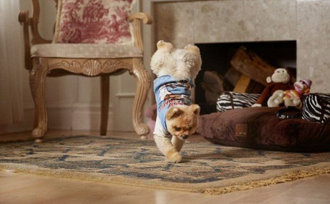 Новая звезда Instagram: умилительный пёс Джифф