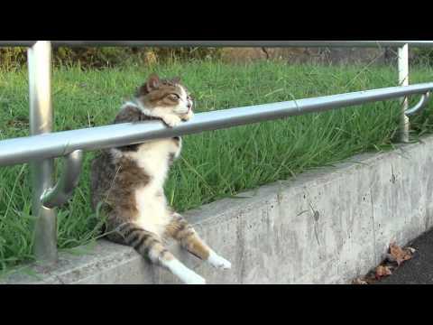 Просто кот, просто сидит