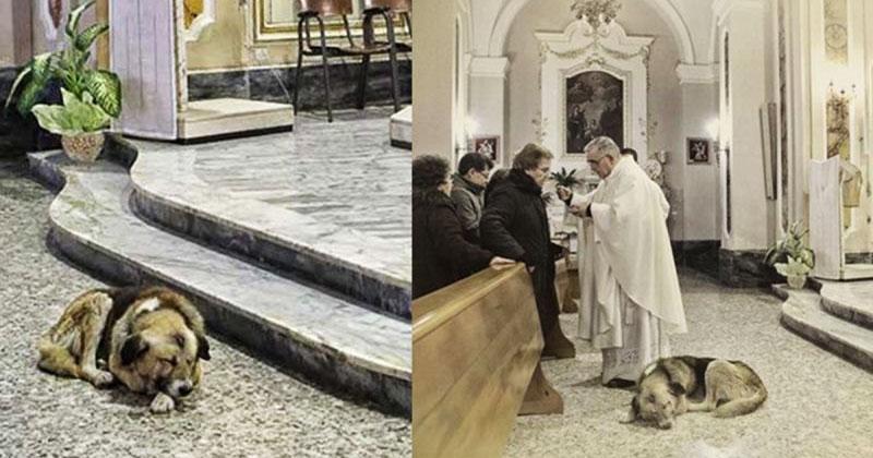 Эта собака приходит в церков…
