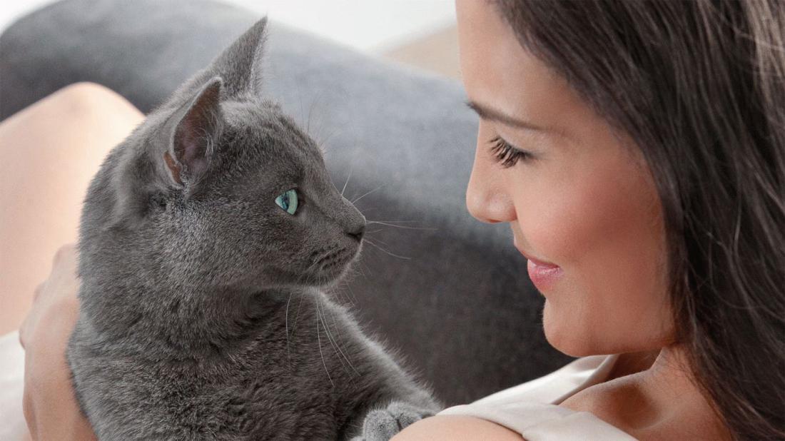 Не смотрите кошке в глаза. С…