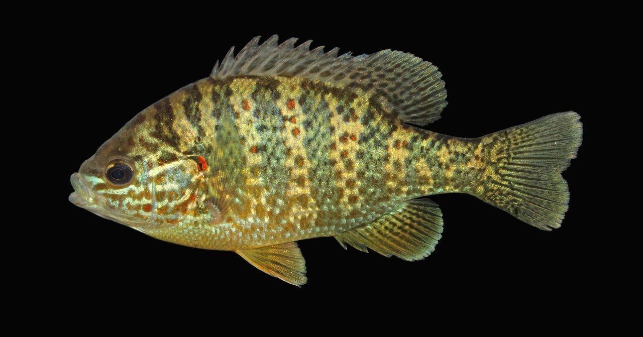 Размер мозга рыбы зависит от места ее обитания