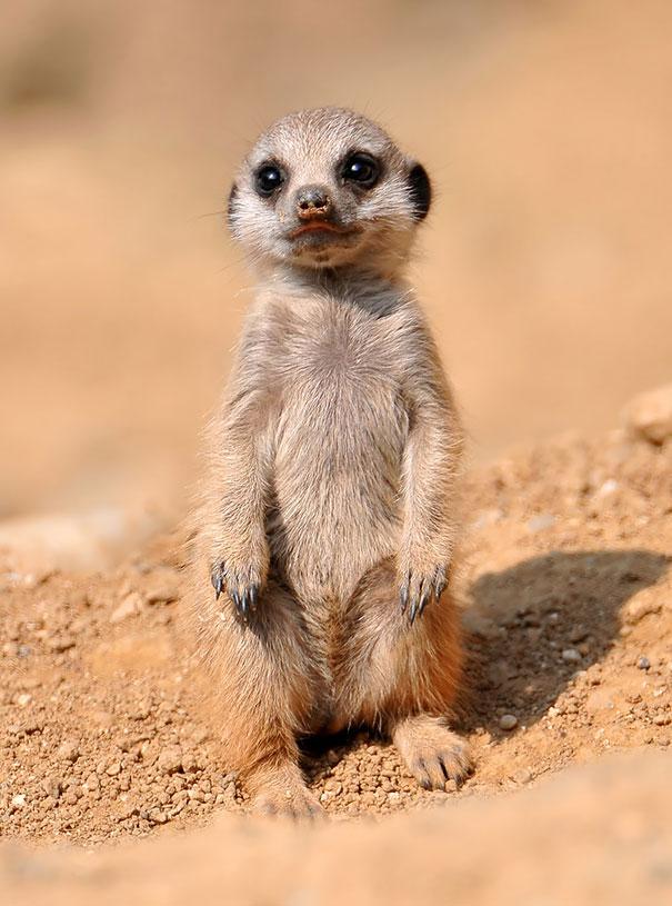cutest-baby-animals-41__605