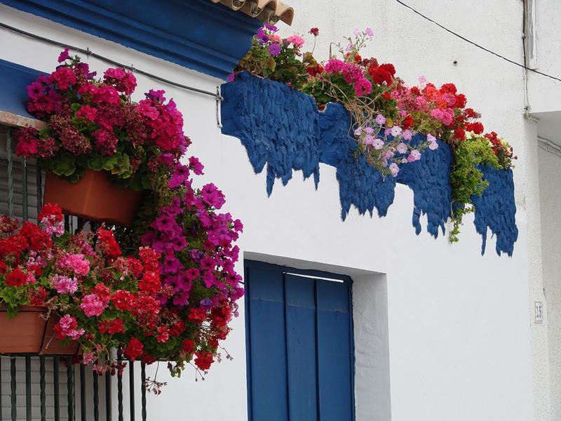 Цветочные балконы и окна италии.