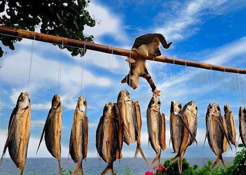 На рыбалку! Позитивная подборка