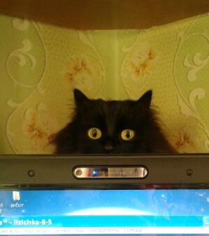 В доме, где есть кошка, других украшений не нужно: смешная котоподборка
